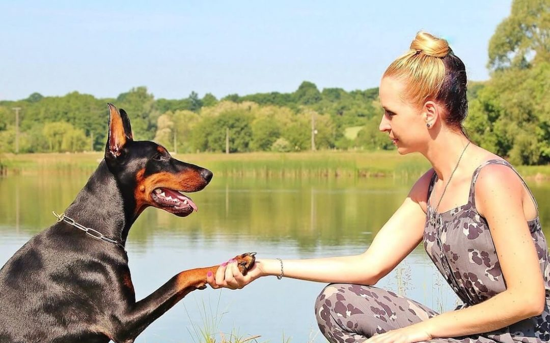 Dog assisted therapy in the dental practice